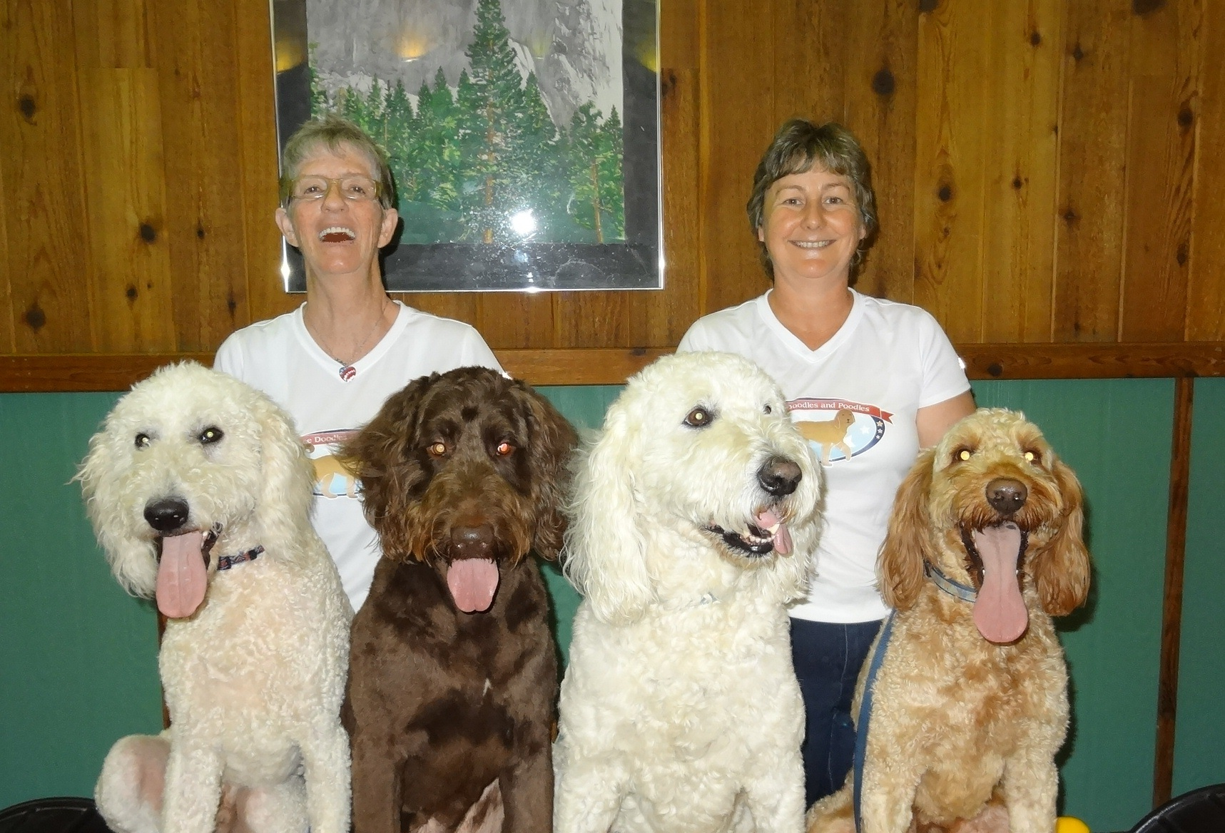 Goldendoodle Puppies Standard Poodle Breeder In Pa