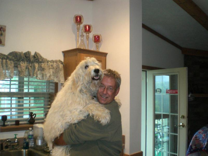 Goldendoodle Puppies & Dogs for Sale in Pennsylvania