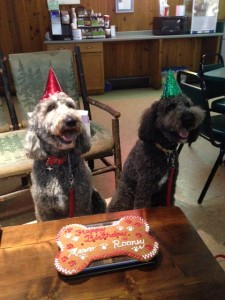 Marco & Rooney celebrate 3 yrs. with a party at Misty Pines