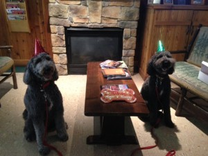 Black Goldendoodles for Sale in PA