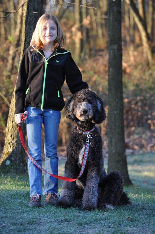 Pennsylvania Goldendoodle & Standard Poodle Breeder