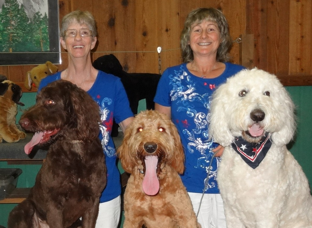 Goldendoodle Puppies & Breeder in PA
