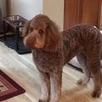 Buster Craig, Sugar pup